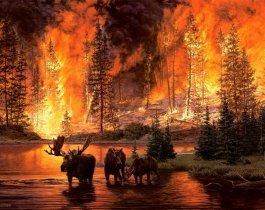В трех муниципальных районах Южного Урала введен особый противопожарный режим.