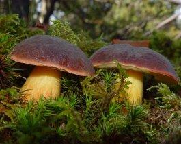 Роскачество ознакомило с тем, как правильно собирать грибы